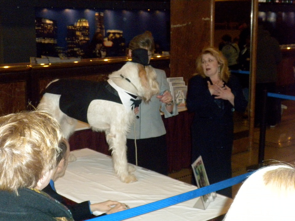 Opera singer serenades Italian Spinone at Hotel Pennsylvania prior to Westminster